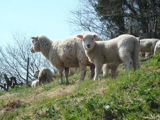 Watermill Cottages: we run a smallholding on our thirteen lovely acres