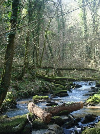 Watermill Cottages: woodlands to explore in the Gara Valley