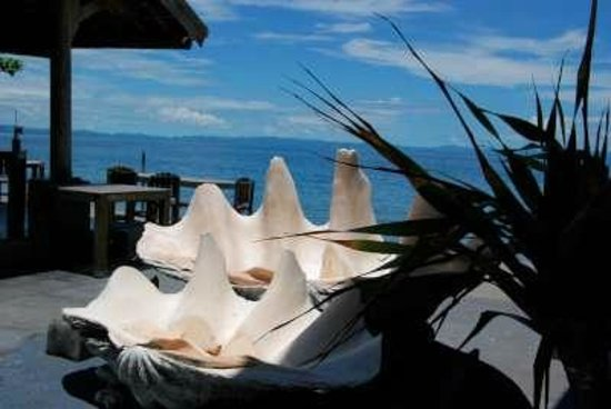 Cafe Alberto:                   See and shells