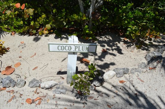 Kamalame Cay:                   Driveway for Coco Plum Cottage
