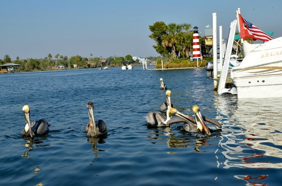 Homosassa Riverside Resort:                   Monkey Island from docks