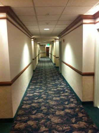 Medallion Hotel:                   hallway