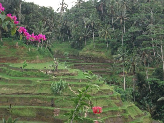 Rice Terrace Cafe:                   View of the terraces to the other side