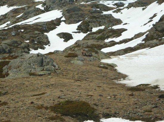 Schutzhutte Schone Aussicht / Rifugio Bella Vista: Piccoli amici