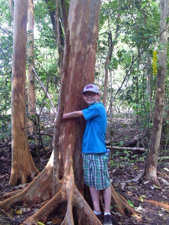 Gray Line Costa Rica:                                     Grandson 'hugging' a tree in Manuel Antonio State Park
