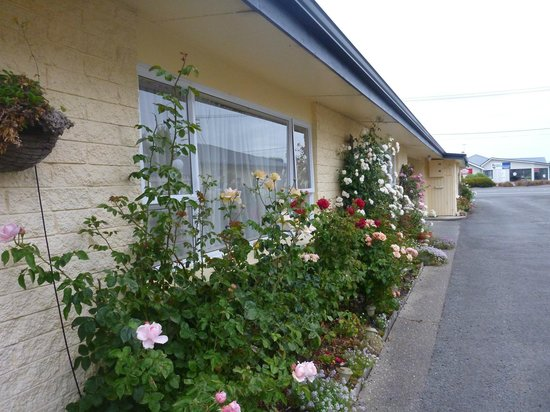 Garden Grove Motel:                   Roses outside the room