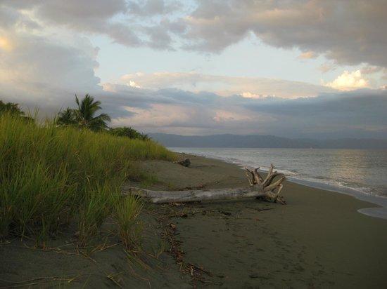 Cabinas Tropicales:                   Playa Preciosa