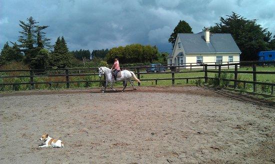 Clarina Equestrian Centre Limerick Ireland Updated