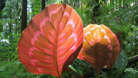 Hawaii Tropical Botanical Garden:                                     Light through leaves