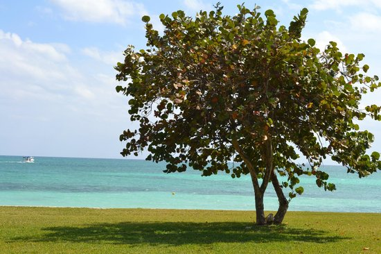 Grand Lucayan, Bahamas:                   Grounds
