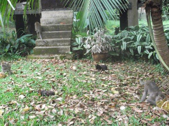 Khao Sok Nature Resort :                   fauna y flora
