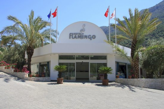 smartline Flamingo: reception