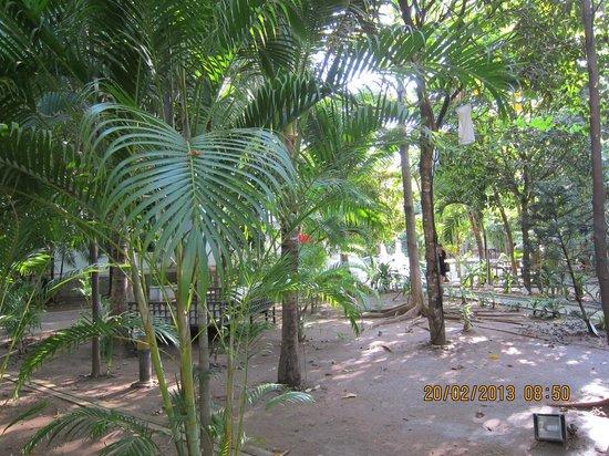 The Kabiki:                   Lush garden