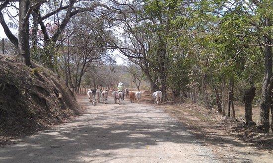 Villas Kalimba: Day trip to Nosara
