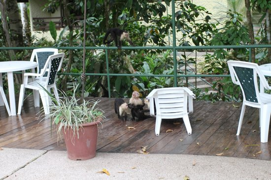 Byblos Resort & Casino : Monkeys playing at the pool area
