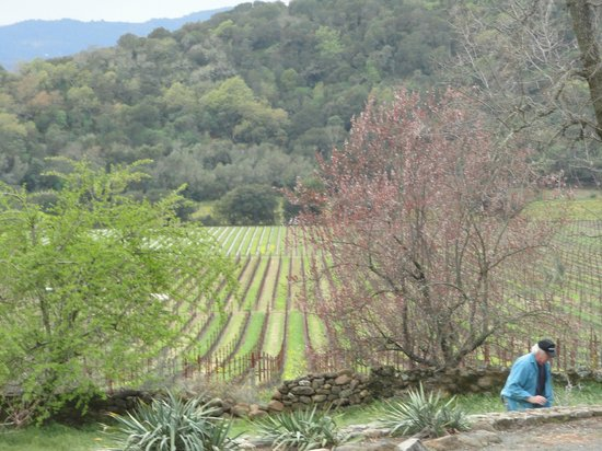 Stags' Leap Winery:                   Beautiful view
