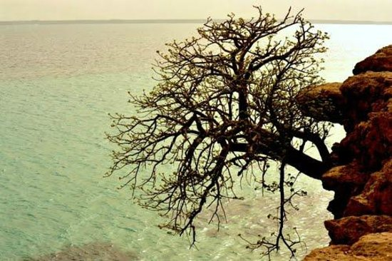 island in eritrea