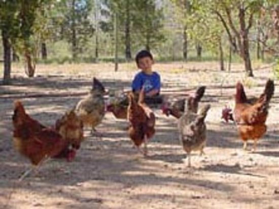 Cochise Stronghold, A Nature Retreat: Happy Chicken EGGS farm eggs featured for breakfasts