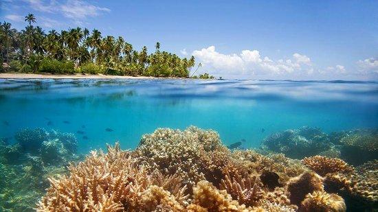 Picture Of Vanua Levu Fiji Tripadvisor