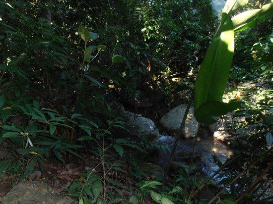 Pousada Ouro Verde:                                     un arroyo con cascada corria sobre un costado de la posada