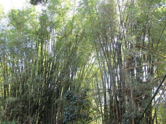 Mayfield Falls:                   Bamboo forest