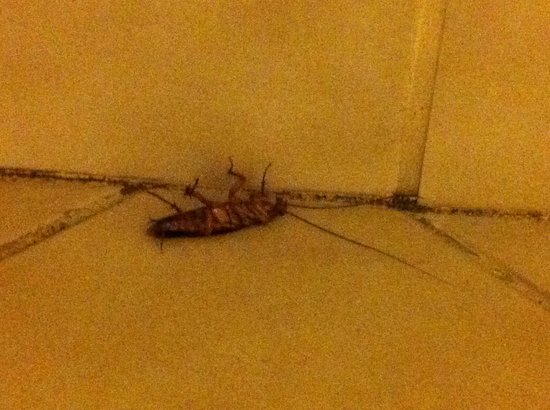 El Segundo, CA:                                                       Cockroach just chillin under the sink....: