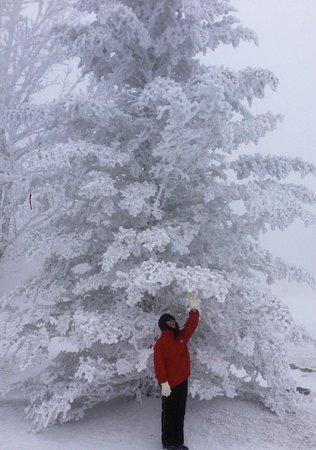 Sugar Ski & Country Club:                   March Snow