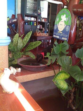 Rung Arun Resort:                   Badass Bandana Cat