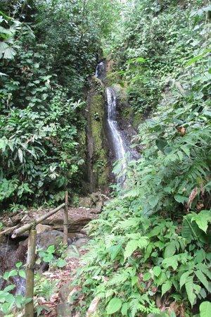 Golfito National Wildlife Refuge :                                     Waterfall at Golfito