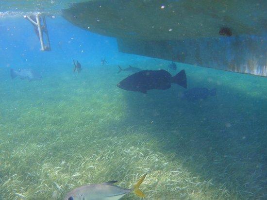 Blackhawk Sailing -  Tours:                   Snorkelling