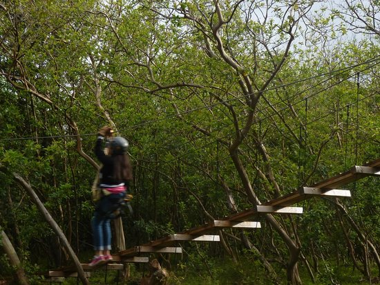 Northshore Zipline Co.:                   Our first leg of the zip
