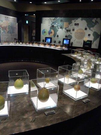 Nashikkokan:                   世界の梨がありました。