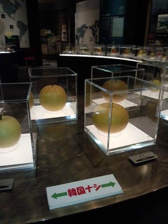 Nashikkokan:                   韓国の梨