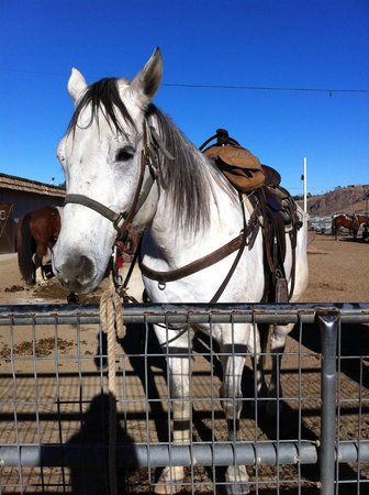 Smoke Tree Stables:                   Horse1