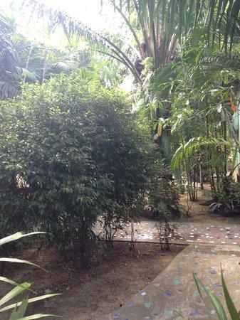 Baan Po Ngam Resort:                   Green garden