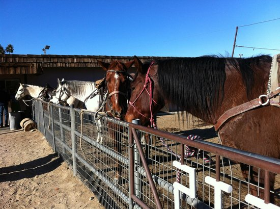 Smoke Tree Stables:                   Horse&Horse&Horse