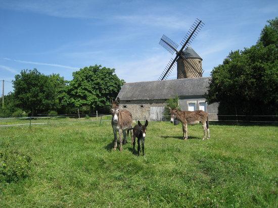 Chambres d'hotes du Moulin de Bel Air : Les ânes