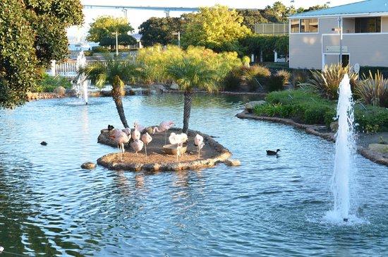 Coronado Island Marriott Resort & Spa:                   Schöne Flamingos