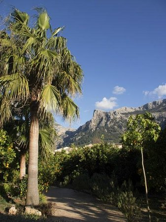 Ca's Curial:                   View from the grounds