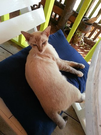 Koh Mak Restaurant Food Art Hut & German Bakery:                   Kitty resident
