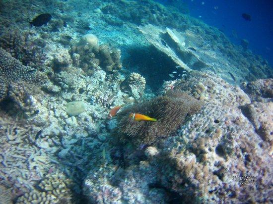 Maafushivaru: nemo a la sortie tortue