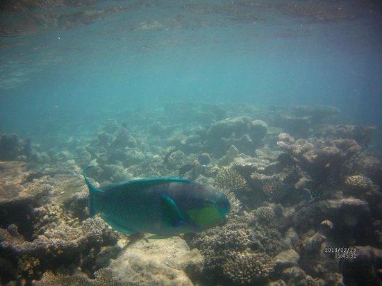 Maafushivaru: barriere de corail de l'hotel