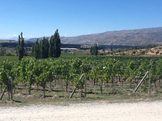 Felton Road Wines:                   Block 3 & Block 5