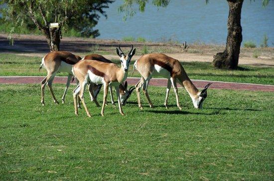 Devonvale Golf & Wine Estate: Springbok
