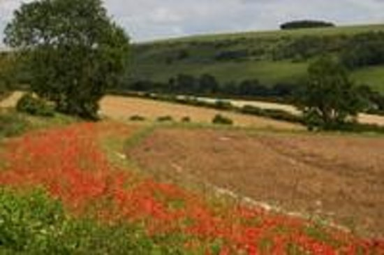 Burpham Country House: poppies in the fields lookingup to the Downs