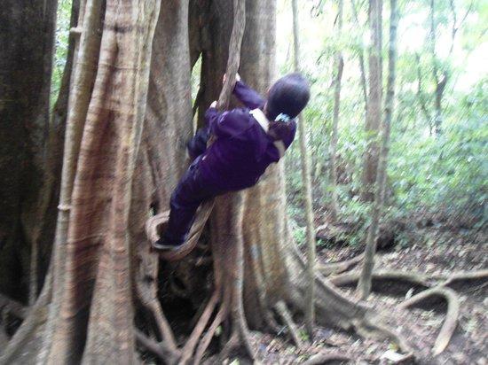 Reserva Curi-Cancha:                   Anna Maria climbing the strangler fig