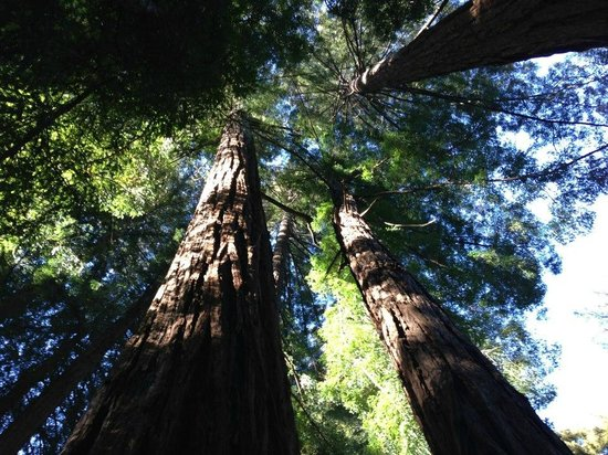 Glen Oaks Big Sur :                                     Breathtaking trees pump fresh air in to your lungs.