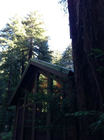 Glen Oaks Big Sur:                                     Sycamore Cabin