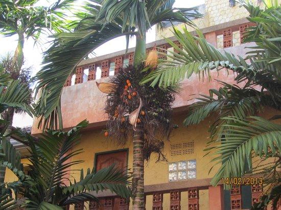 Casa Brazil Homestay & Gallery:                   Casa Brazil