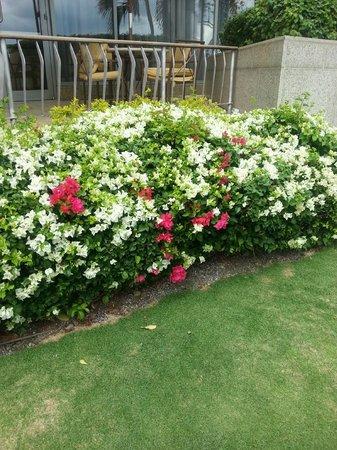 Hyatt Regency Trinidad:                   Flowers